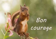 Bon Courage, Encouragement, Gifs, Camping, Animals, Motivation, Nature, Get Well Soon, Anime Animals