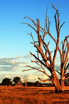 Five Tips for Surviving the Outback in Australia - Hot, harsh, and hauntingly… Visit Australia, Australia Travel, Travel Guides, Travel Tips, Travel Oz, Travel Hacks, New Zealand Travel, Great Barrier Reef, Culture Travel
