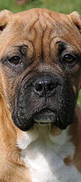 szkolenia psów kraków