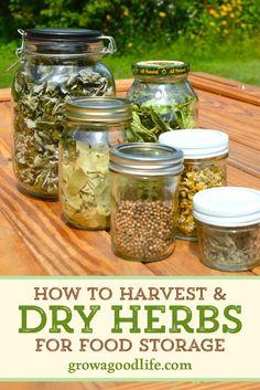Diy Herb Garden, Edible Garden, Hanging Herbs, Hanging Planters, Health Dinner, Herbs Indoors, Dehydrator Recipes, Growing Herbs, Saveur