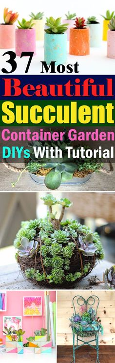 Be creative with the colorful succulents when arranging them, learn these 37 DIY Succulent Container Garden Ideas!