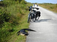 BIke Florida. List of bicycle trails in Florida!