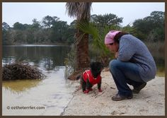 Oz the Terrier: PR Friendly