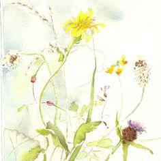 acuarelas de flores silvestres - Google Search