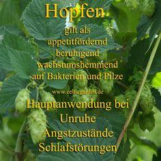 #Hopfen