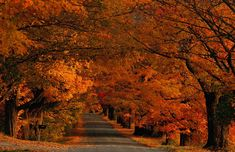 ....through the fall foilage in Vermont...    #ridecolorfully