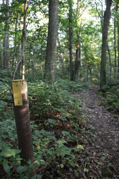 Yellow blazes mark the Ice Age National Scenic Trail within Devils Lake State Park and beyond.