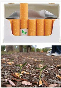 Cigarettes with seeds