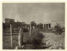 כפר ערבי שייח דנון 1968