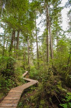 Schooner Cove is just one of the gorgeous hiking trails in and around Tofino, British Columbia.