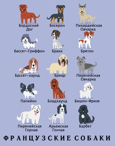 Such Good Dogs: Breed of the Month--Bichon Frise French Dog Breeds, French Dogs, French Bulldog, Bichon Frise, Basset Hound, Origin Of Dogs, Dog Breeds Chart, Puppy Breeds, Dogue De Bordeaux