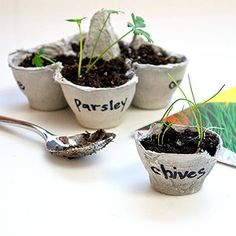 Egg cup seed starters - great project for Earth Day!