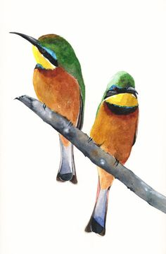 Bee Eater painting Bird  watercolor print  ART  5 by Splodgepodge, $15.00