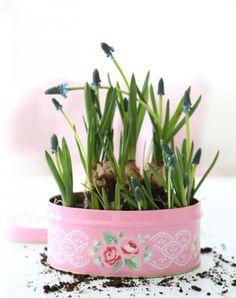 blauwe druifjes in een koektrommel(tje), voorjaar in huis!