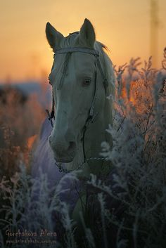 At heart a horse is a creature that  is fearless and fleet, gentle and strong.