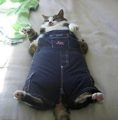 Do these jeans make me look fat?