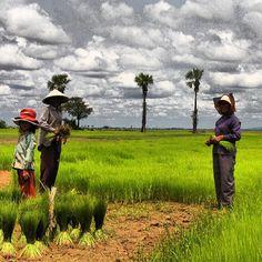 Cambodia farmers, Photo by ulucchetti