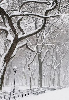 Snow Covered Trees...a snow covered walkway,fence, benches & Lightposts