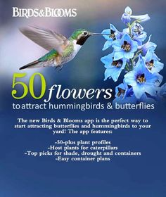 50 flowers that attract hummingbirds and butterflies