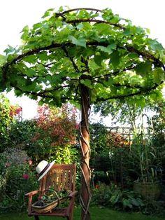 Оригинальная опора для вьющихся растений.