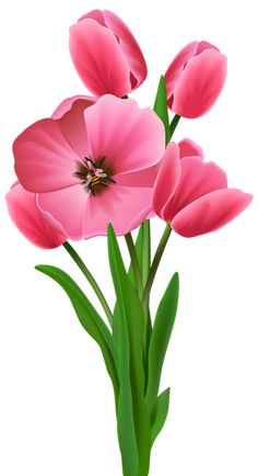 Tulips Transparent PNG Image