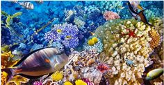Great Barrier Reef, Australia Fish and coral in the Great Barrier Reef. Great Barrier Reef, New York Times, Fish Graphic, Rod Pocket Curtains, Curtain Panels, Red Sea, State Art, Central America, Natural Wonders