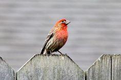Backyard bird visitor