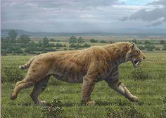 Smilodon Basics + The American lion Prehistoric Wildlife, Prehistoric Dinosaurs, Prehistoric World, Prehistoric Creatures, Stone Age Animals, Dinosaur Art, Extinct Animals, Mammals, Animals And Pets