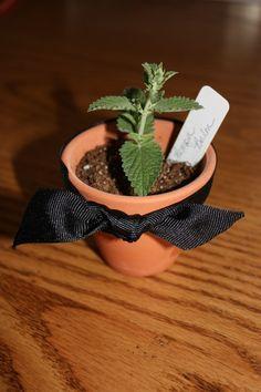 For more info about Gynostemma can visit http://www.immortalitea.com/jiaogulan-tea-gynostemma-pentaphyllum-p-229.html