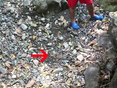 Panama snake: Separated from the children by an equis, one of Panama's most dangerous snakes