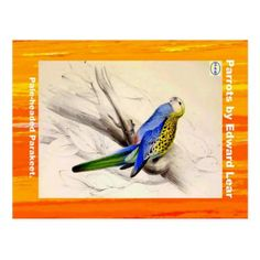 Edward Lear. Pale-headed Parakeet. Postcard - postcard post card postcards unique diy cyo customize personalize