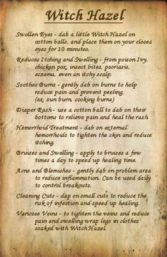 Fluster Buster: Witch Hazel Uses - WWII Series Natural Health Remedies, Natural Cures, Natural Healing, Herbal Remedies, Natural Treatments, Natural Foods, Cold Remedies, Healing Herbs, Holistic Healing