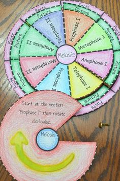 Science topics include mitosis and meiosis. Cell Cycle Activity, Mitosis Y Meiosis, Science Cells, Science Biology, Science Lessons, Science Art, Biology Classroom, Biology Teacher, Middle School Science
