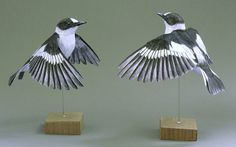 Collared Flycatcher paper model by Johan Scherft