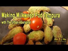 Making Milkweed Pod Tempura w/ The Urban-Abo Aboriginal Food, Tempura, Seed Pods, Seeds, Urban, Breakfast, Morning Coffee