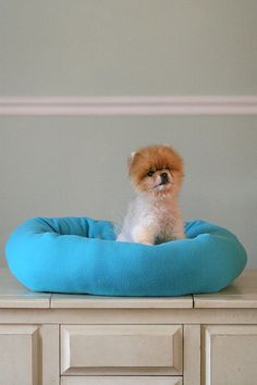This teal bed is for the bigger dog or cat or one with arthritis that needs to stretch out. It has large 9 inch sides for warmth or for those whoThis teal bed is for the bigger dog or cat or one with arthritis that needs to stretch out. It has large 9 inch sides for warmth or for those who need to keep their heads up to see whats going on!!!