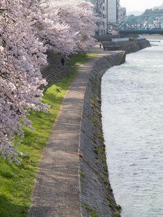 Kanazawa/Japan 金沢 一気に春