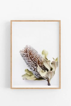 Fine Art 'Banksia I' Photographic Print Wall Mounted Shelves, Shelf, Victoria Australia, Wall Art Quotes, Quote Posters, Home Decor Wall Art, Wall Spaces, Botanical Prints, Artwork Prints