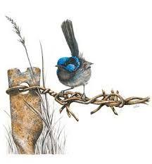 'Rustic Beauty' Superb Blue Wren graphite pencil drawing by Linda Weil Watercolor Bird, Watercolor Paintings, Watercolours, Bird Artwork, Australian Birds, Bird Pictures, Wildlife Art, Beautiful Birds, Animal Drawings