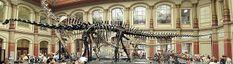 Lumea Animalelor: Istoria evolutiva a vertebratelor