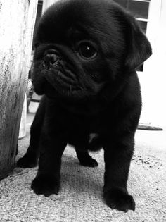 Someone buy me one pretty please - my birthday is coming up quickly!!!