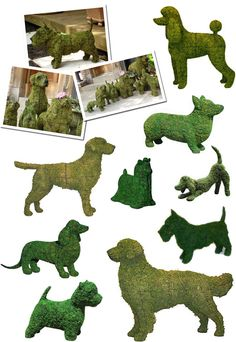 Dog Topiaries.....there's a scottie.