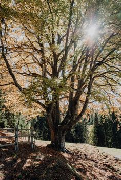 Baum auf Lichtung Seen, Trunks, Plants, Travel, Tree Structure, Drift Wood, Viajes, Tree Trunks, Destinations