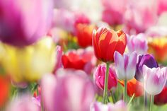 5 Affordable Seasonal Flowers for Spring!  Of course tulips are on the list :)