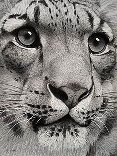 This is a pencil drawing.... a drawing!!!!: