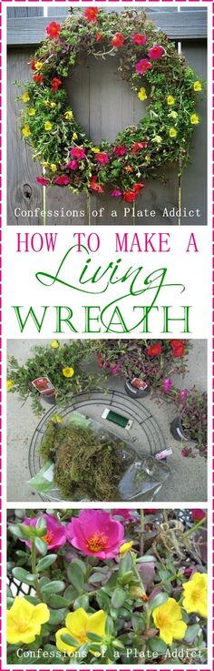 CONFESSIONS OF A PLATE ADDICT: How to Make a Living Wreath