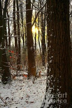 This image was captured along the nature walk at Mitchell State Park in Cadillac, Michigan, USA.
