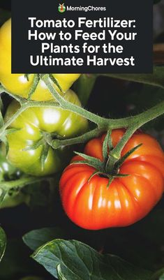 Tomato Fertilizer: How to Feed Your Plants for the Ultimate Harvest - Healthy Plants Tomato Fertilizer, Fertilizer For Plants, Garden Fertilizers, Container Vegetables, Organic Vegetables, Vegetable Garden Planning, Vegetable Gardening, Texas Gardening, Organic Nutrients