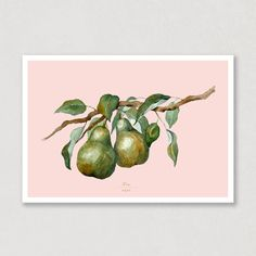 I love how this blush background complements the green in this watercolour poster. These pears on a branch reminds me so much of summer. Just like the whole collection, you can find this poster with 6 different backgroundcolours! Take a look, and see which one is your favorit 😍🍐 #poster #pears #pearbranch #watercolors #watercolours #backgroundcolours #art Watercolor Postcard, Watercolor Artwork, Watercolor Paper, Colorful Backgrounds, Pears, Blush, Illustration, Prints, Poster