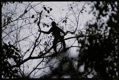 Sam Abell, National Geographic, Social Media Marketing, Images, Amazon, Gallery, Photography, Monkey, Spider